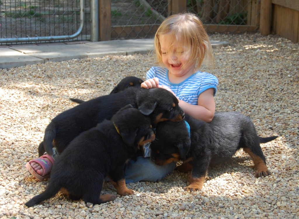 Aeva Lee with a swarm of rottie pups
