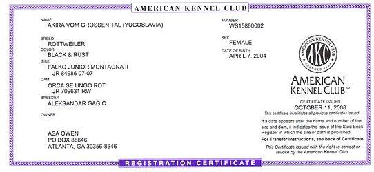 Akira AKC Rottweiler Registration Papers | Champion German