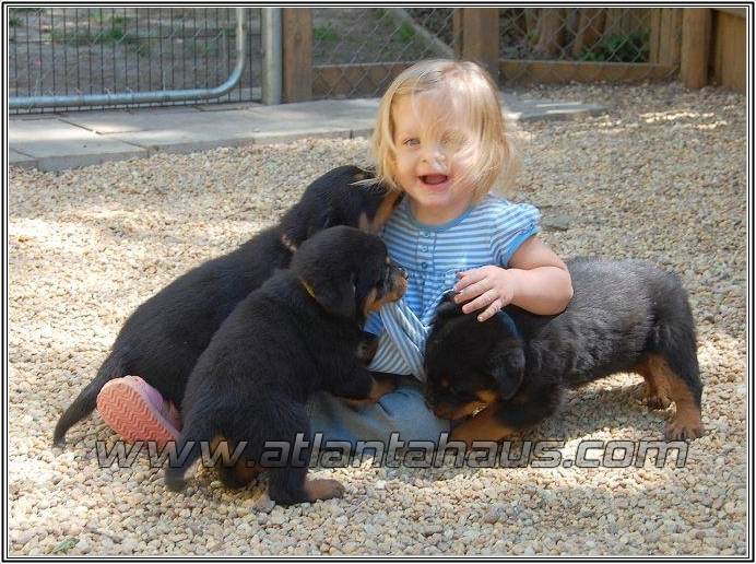 Rottweiler Puupies With Aeva Lee