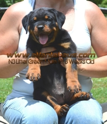 N3 Litter Green Male