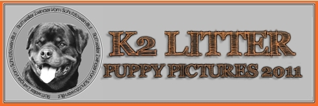 K2 Rottweiler Puppies Pictures and Videos